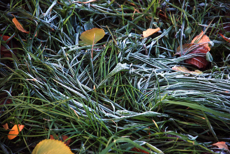 Frost on the grass royalty free stock photos