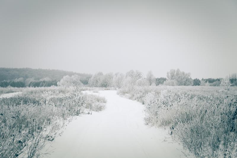 Frost on a grass. Russian provincial natural landscape in gloomy weather. Toned.  royalty free stock photography