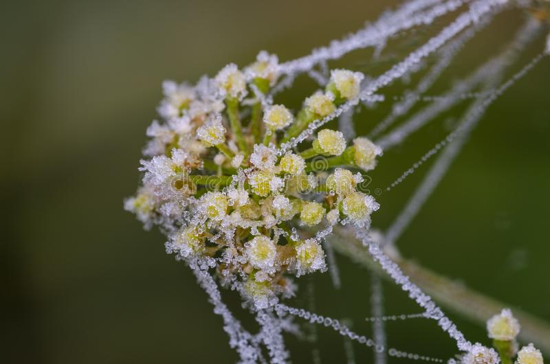 Frost on grass and spider web at autumn. Frost on grass and spider web at a cold autumn morning. Close up stock photos