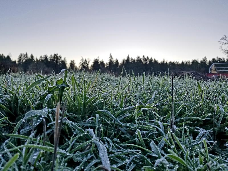Frost on grass. Winter 2017 Saanichton Canada stock photography