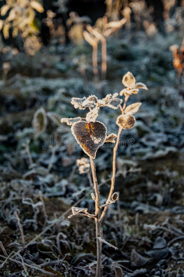Download Frost On The Grass And Yellow Leaves Stock Photo - Image: 83716800