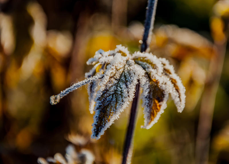 Download Frost On The Grass And Yellow Leaves Stock Photo - Image: 83716980
