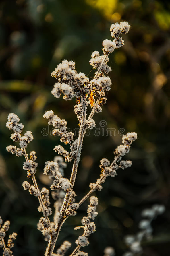 Download Frost On The Grass And Yellow Leaves Stock Photo - Image: 83717908