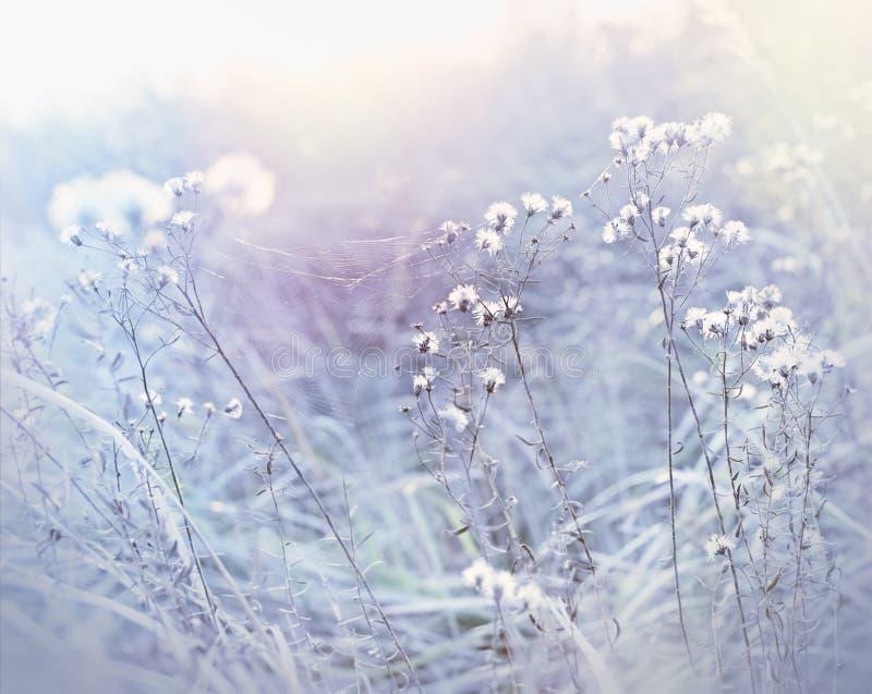 Frost i ängen, spindelnät på torrt gräs fotografering för bildbyråer