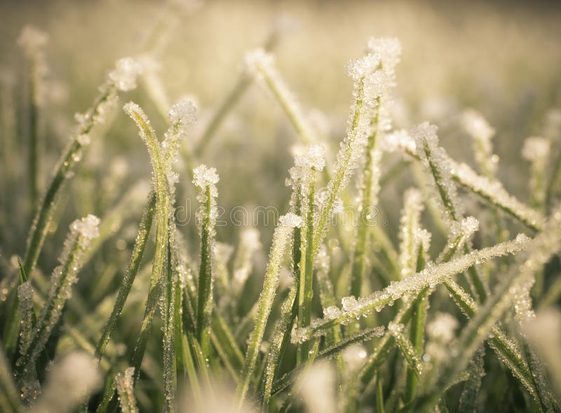Frost on lawn. Photo shows the effect of frost on lawn stock images