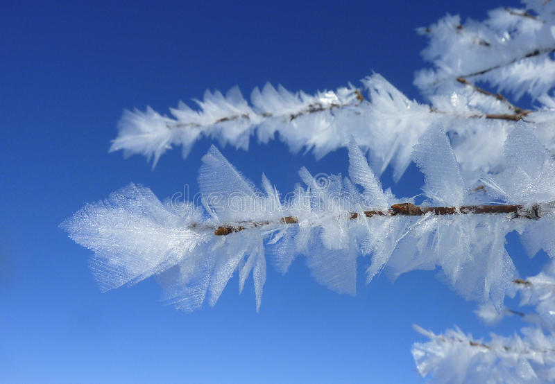 Frost leaf in lapland royalty free stock photography