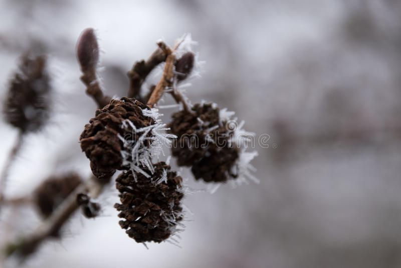 Frost macht wirkliche Spitzen lizenzfreie stockfotografie
