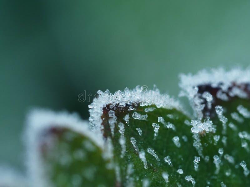 Frost na licença da morango foto de stock royalty free
