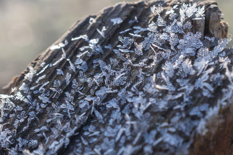 Frost nas árvores foto de stock