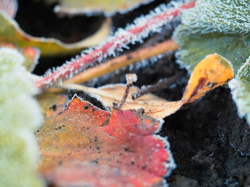Frost nas folhas da morango fotos de stock royalty free