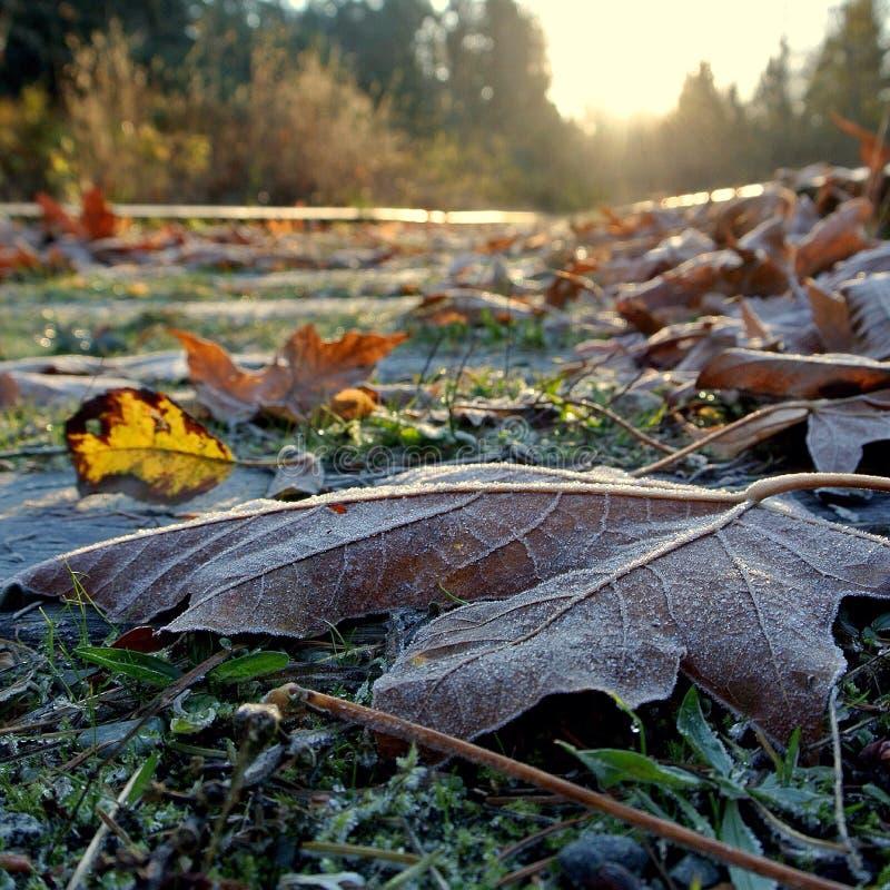 Frost novembro imagem de stock