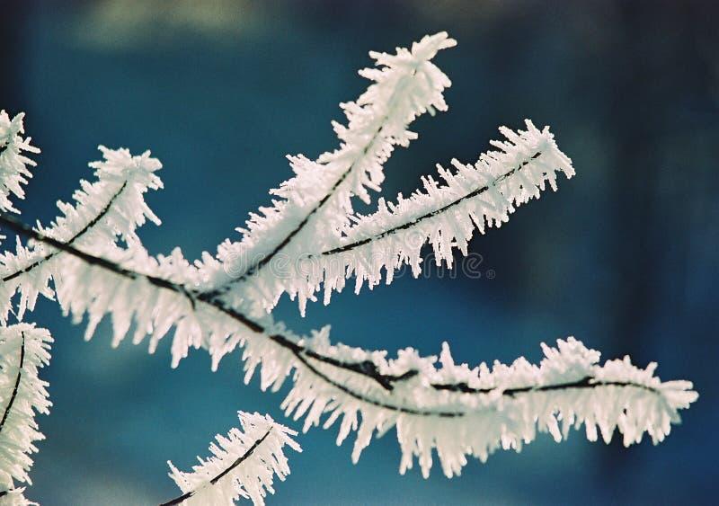 Frost och filial arkivbilder