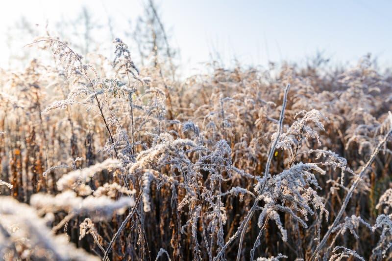 Frost på gräset och gräs Iskristaller stängs Bakgrund för naturvinter Vintern, förstadag arkivfoton