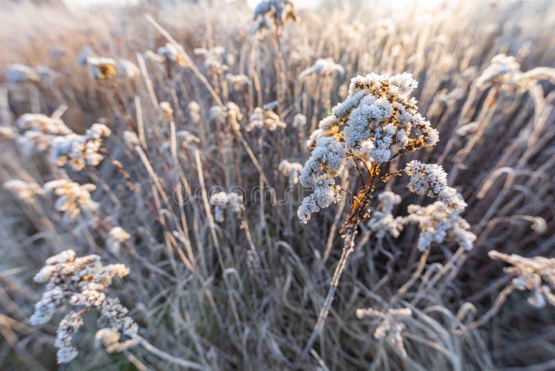 Frost på gräset och gräs Iskristaller stängs Bakgrund för naturvinter Vintern, förstadag fotografering för bildbyråer