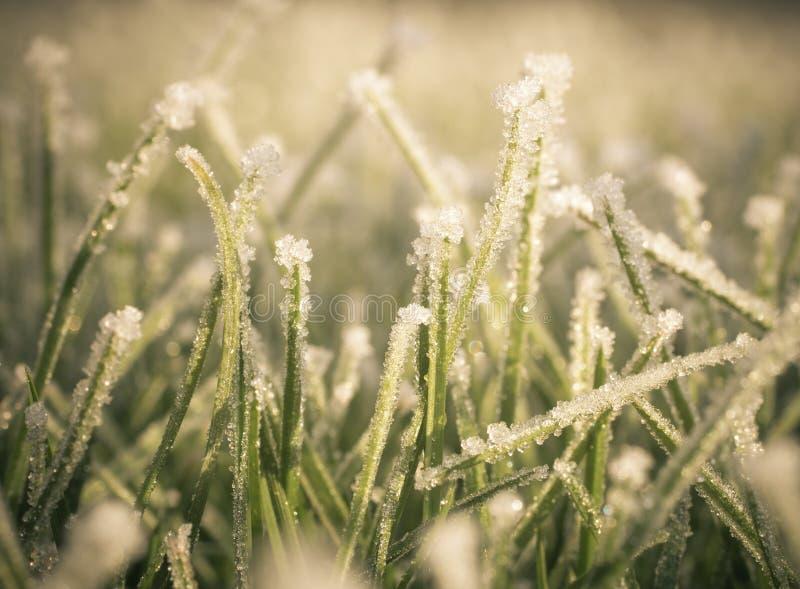 Frost på gräsmatta arkivbilder
