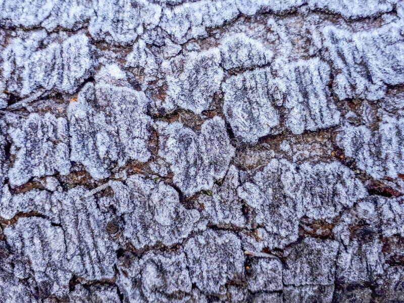 Frost på skällmodell på en journal fotografering för bildbyråer