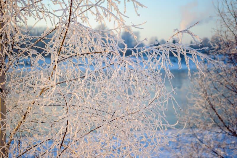 Frost på treesna royaltyfria bilder