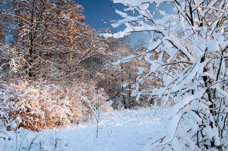Frost på treesna royaltyfri fotografi