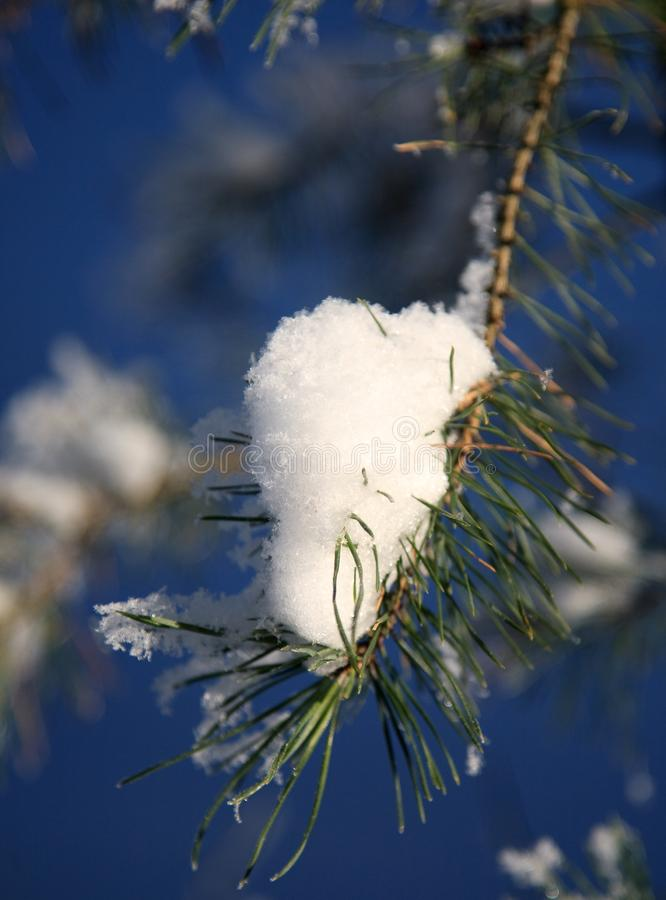 Download Frost on Pine stock photo. Image of abstract, hanging - 16775976