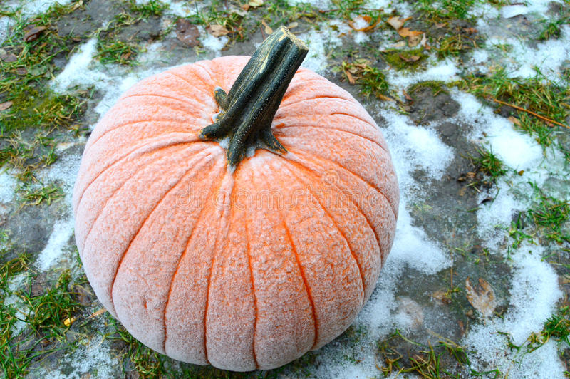 Frost on Pumpkin. A pumpkin with frost on it sitting in a snowy lawn royalty free stock photo
