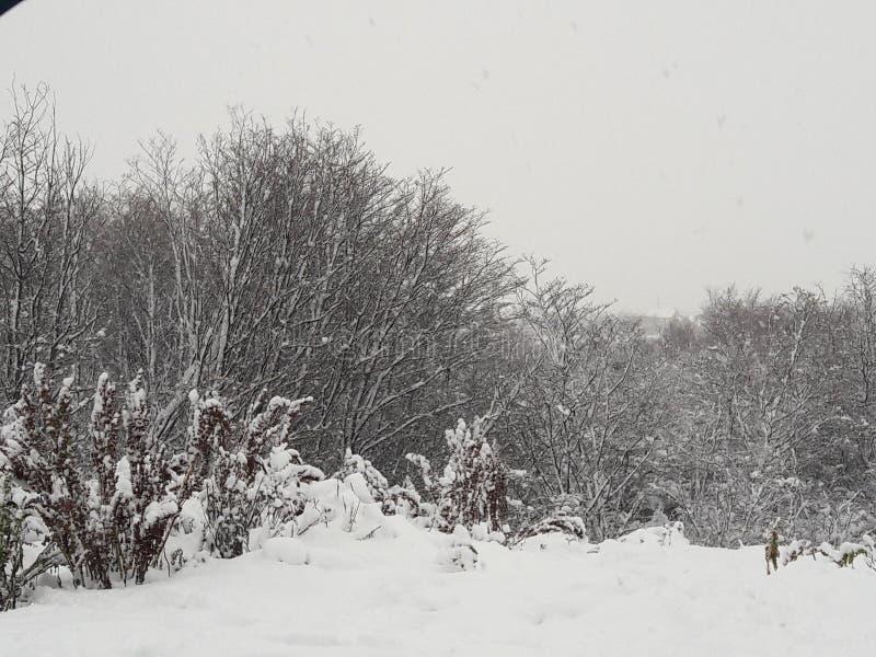 Frost-Schnee ushuaia Wald lizenzfreie stockbilder