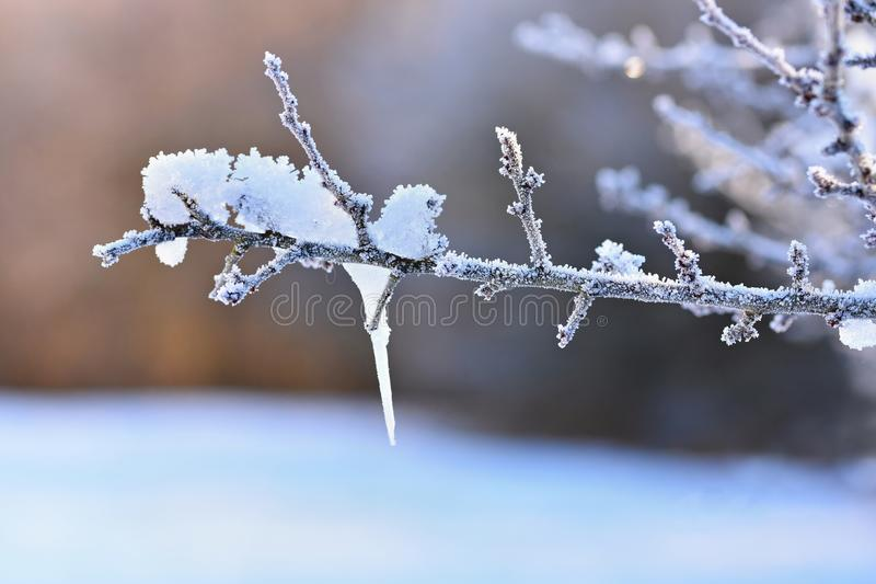 Frost and snow on branches. Beautiful winter seasonal background. Photo of frozen nature. Frost and snow on branches. Beautiful winter seasonal background royalty free stock photography