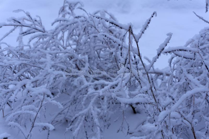 Frost snow-covered bush stem on the icy ground. stock photo