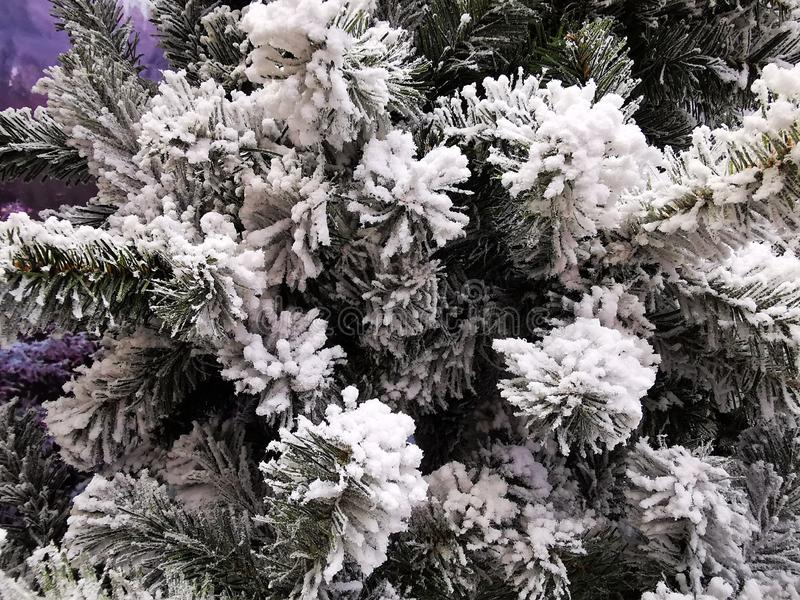 frost snow covered spruce branches beautiful winter backdrop christmas wallpaper card cover banner branch cold forest 163242963