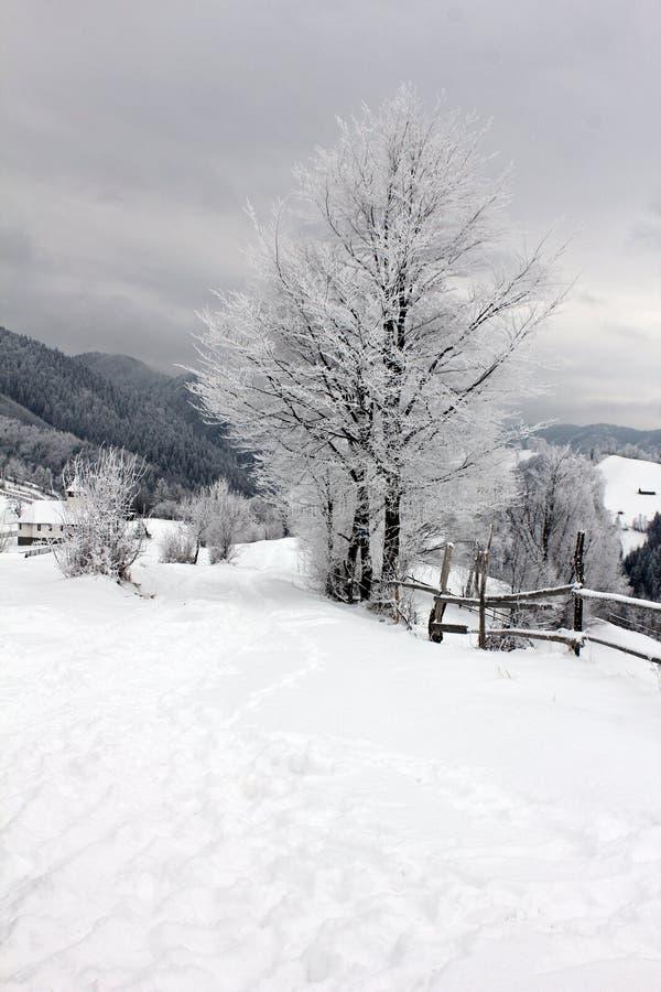 Frost sugli alberi fotografia stock
