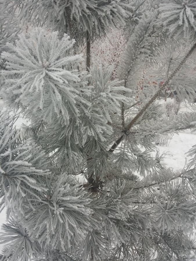 Frost sur des branches photos libres de droits