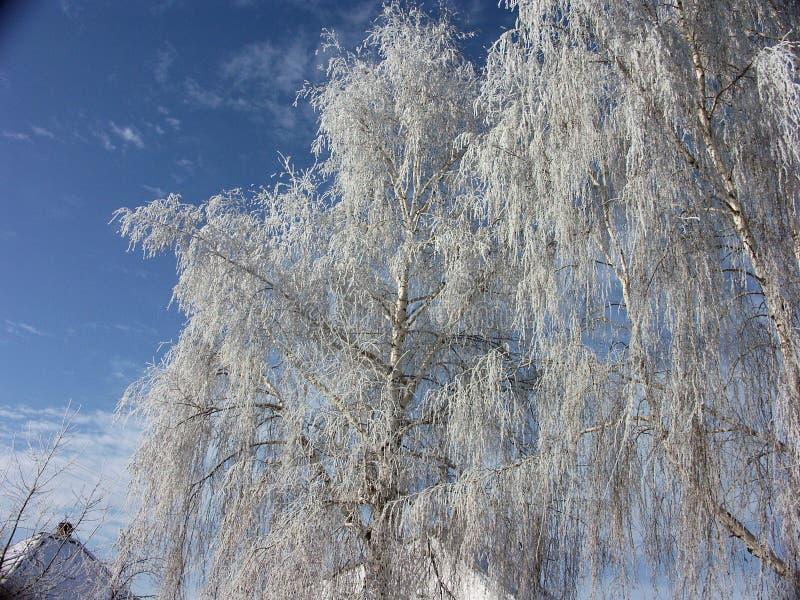 Frost sur les arbres photographie stock libre de droits