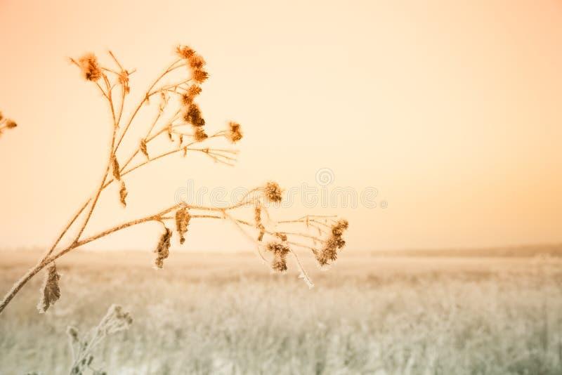Frost sur une herbe Paysage naturel provincial russe par temps sombre Foyer sélectif Profondeur de zone toned photo stock