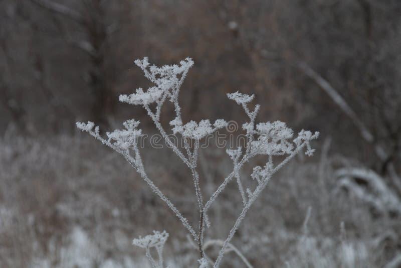 Frost sur une herbe Paysage naturel provincial russe par temps sombre Foyer s?lectif Profondeur de zone photographie stock