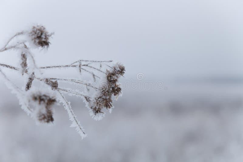Frost sur une herbe Paysage naturel provincial russe par temps sombre Foyer s?lectif Profondeur de zone photo libre de droits