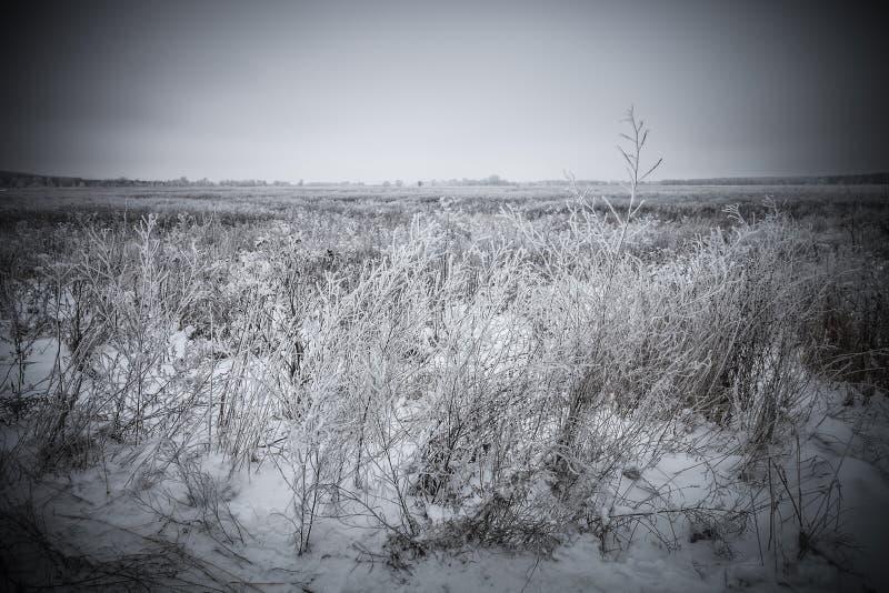 Frost sur une herbe Paysage naturel provincial russe par temps sombre toned photographie stock