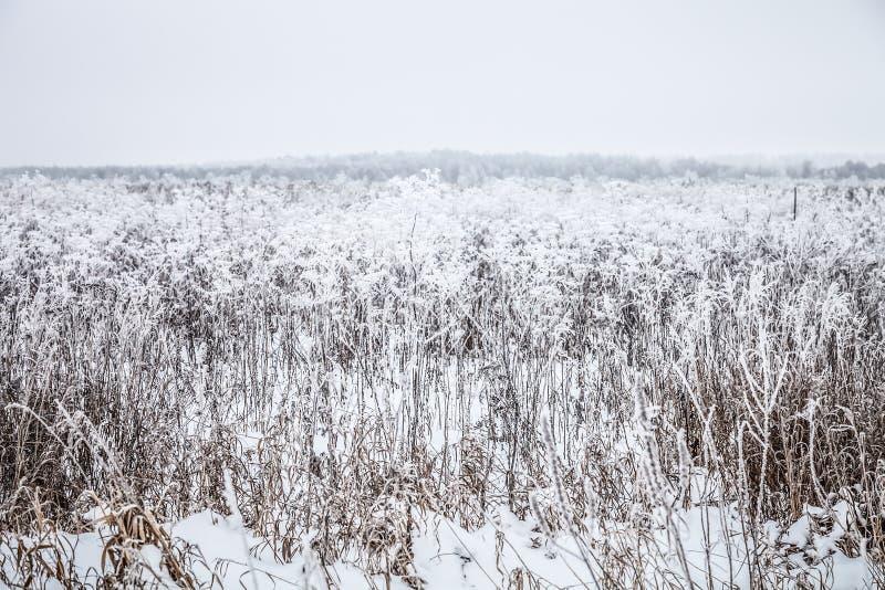 Frost sur une herbe Paysage naturel provincial russe par temps sombre toned images stock