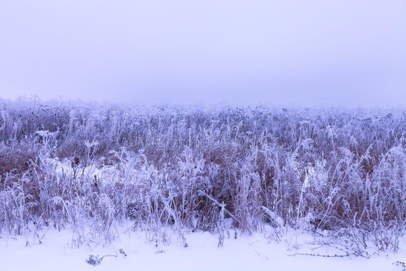 Frost sur une herbe Paysage naturel provincial russe par temps sombre toned photos stock