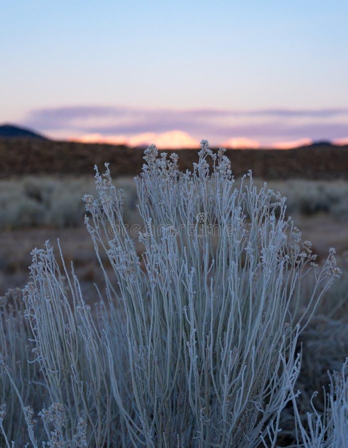 Frost täcker de få ökenväxterna nedanför Sierra Nevada på soluppgång arkivfoto