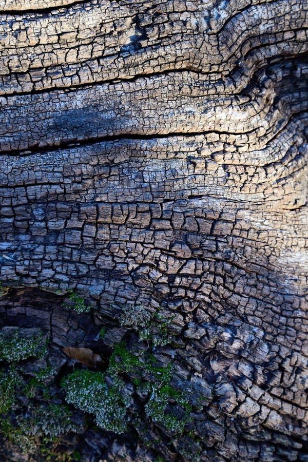 Frost-täckt stubbe på en kall November morgon arkivfoton