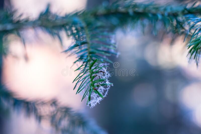 Frost on tree branch stock images