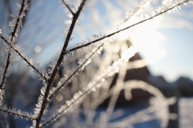 Frost on a tree branch. Sparkling frost on a dark tree branch in the early morning in the bright sun stock photos