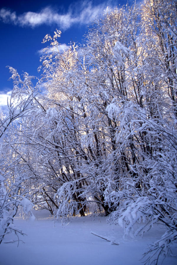 Frost trees stock photos