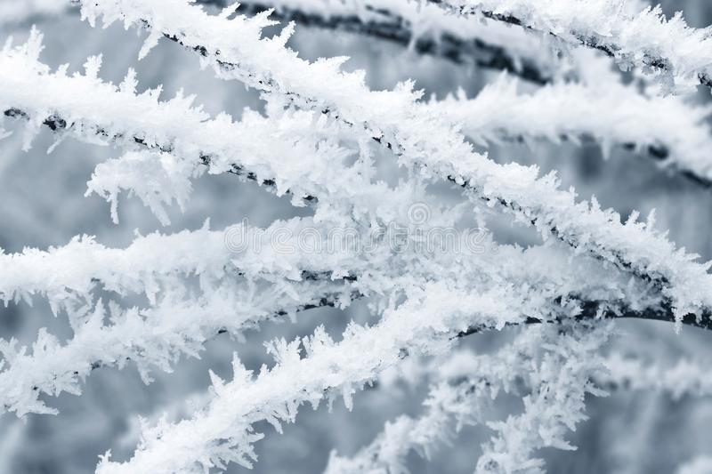 The frost on the trees. Close up Ice crystals of frost on tree branch in winter with soft focus background stock photo