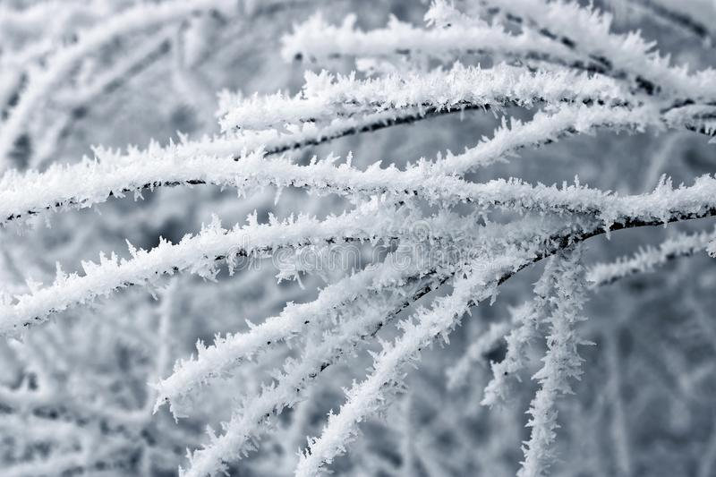 The frost on the trees. Close up Ice crystals of frost on tree branch in winter with soft focus background royalty free stock image