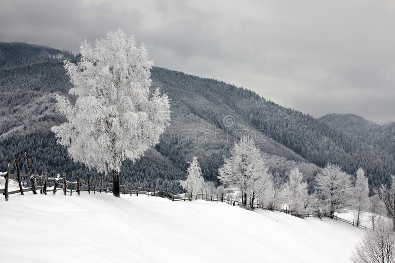 Frost on the trees and forest covered with snow royalty free stock images