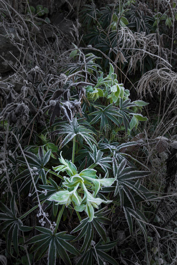 Frost on vegitation on a cold day. stock photos