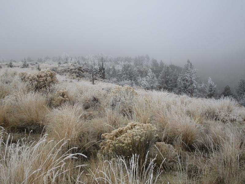 Frost in the Wild Grass. Trees and wild grasses with a fresh morning frost with Smith Rock barely visible in the background through the winter fog in Central royalty free stock images
