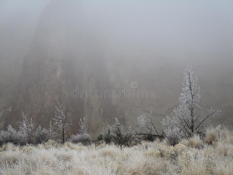 Frost in the Wild Grass. Trees and wild grasses with a fresh morning frost with Smith Rock barely visible in the background through the winter fog in Central royalty free stock image