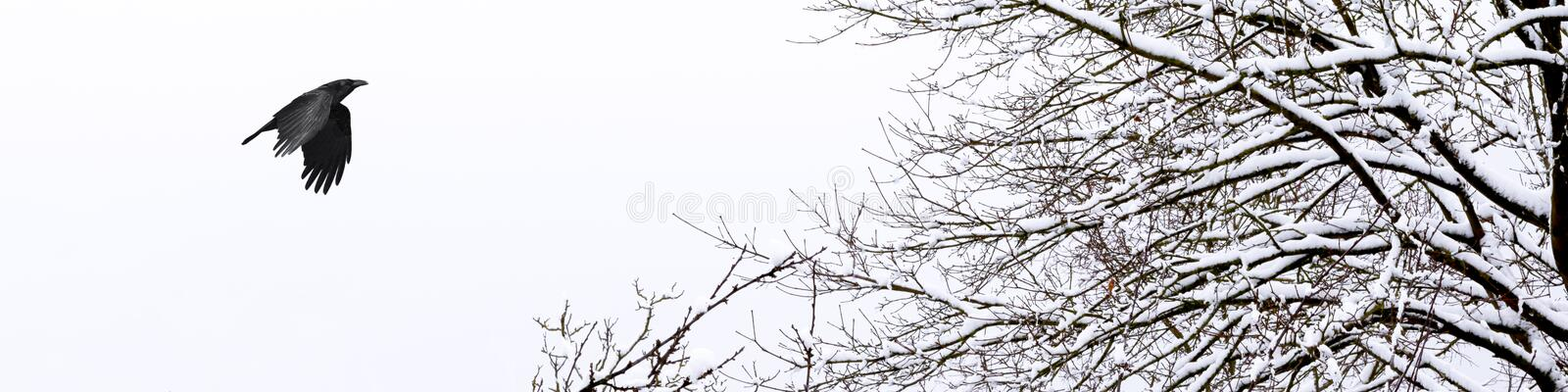 Horizontal banner of a cold and snowy winter. Horizontal banner of a cold winter white day with a raven in the sky stock photos