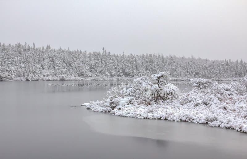 Frost y nieve imagen de archivo